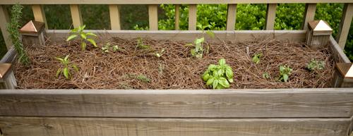 Mah preshus herb garden