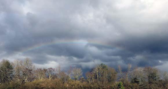 rainbow022416sm
