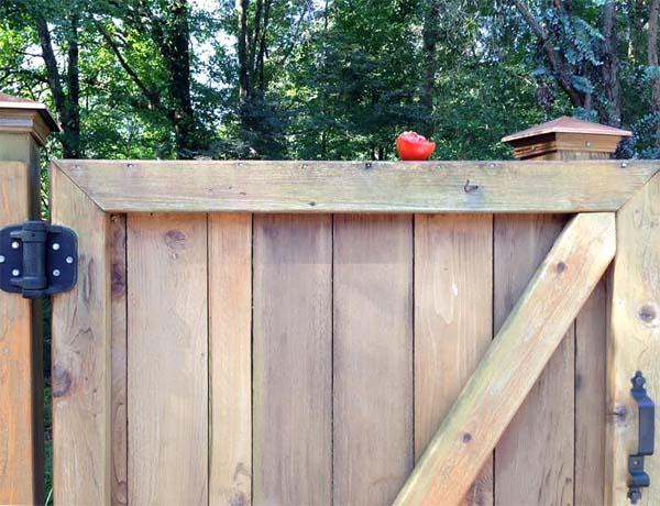tomato-gate